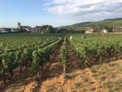 HARVEST 2018 DOMAINE DU CHATEAU DE LA COMMARAINE_Photo Credit Chateau de la Commaraine_3